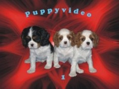 puppyvideo1