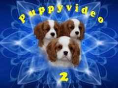 puppyvideo2